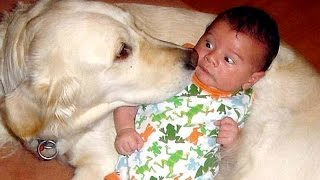 Download Funny ANIMALS - The World's best entertainment - Funny animal compilation Video