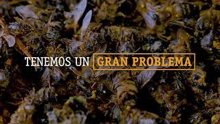 Download Imagina un mundo sin abejas... Video