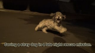 Download Saving Oakley in a late night rescue mission. Please help her find a home. Video