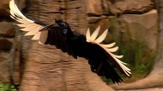 Download Training for the Ameritas Bird Encounter at the Cincinnati Zoo Video