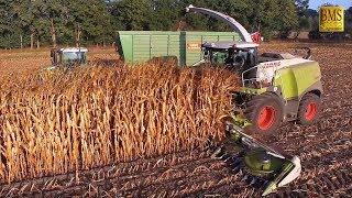 Download Maisernte 2018 - Mais häckseln u. silieren Energiemais für Biogas plant biggest corn harvest Video