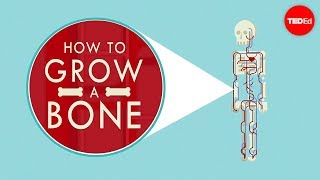 Download How to grow a bone - Nina Tandon Video