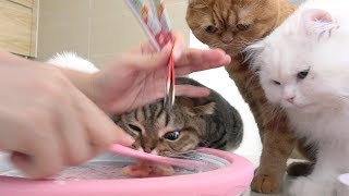 Download 철판 아이스크림에 고양이들이 난리가 났어요 Video