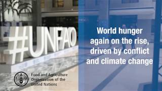 Download New UN report: World hunger again on the rise, driven by conflict and climate change Video