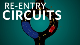 Download Re-entry Circuits - Cardiology Podcast #2 Video