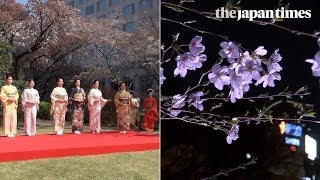 Download Cherry blossom season 2018 in Tokyo, Japan Video