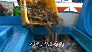 Download [어영차바다야-제철수산] 새우 Video
