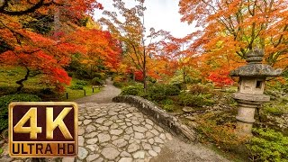 Download Japanese Garden 4K resolution - 1 hour - Nature Sound for Relaxation - Autumn Video