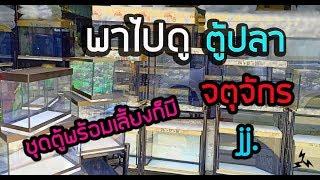 Download Four9: #ตู้ปลาที่ @จตุจักร (กทม.) Video