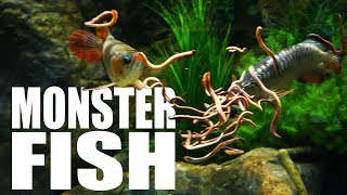 Download Feeding my fish MASSIVE WORMS | The King of DIY Video