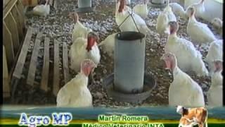 Download Los Médicos Veterinarios Virginia Feyminda y Martín Romera hablan de pollos y pavos Video