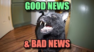 Download Talking Kitty Cat - Good News & Bad News Video