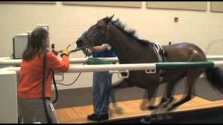Download Performing Treadmill Endoscopy at Rood & Riddle Video