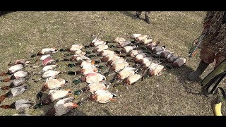 Download Охота 2019г. Селезни летели как сумасшедший. Часть первая. The drakes flew like crazy. Hunting Video