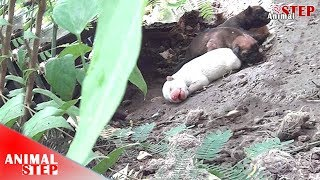 Download Rescue Dog Family Spend Life Under a Hut – Finally Found Sweet Forever Home Video