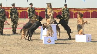 Download BSF Dog Training Video Video
