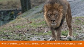 Download How to Photograph Zoo Animals Video