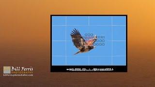 Download 5 Minute Photo - Birds in Flight Camera Settings Video