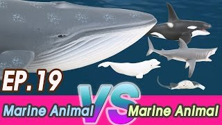 Download [En] #19 Marine Animal VS Marine Animal (Fighting Dinosaurs for kids) 공룡싸움 Collecta figure Video