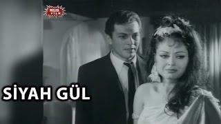 Download Siyah Gül (1966) - Türkan Şoray & Kartal Tibet - Tek Parça İzle Video