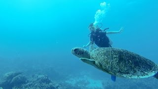 Download GoPro HD Scuba diving Great Barrier Reef Video
