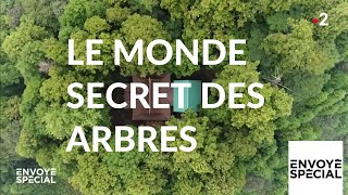 Download Envoyé spécial. Le monde secret des arbres - 7 mars 2019 (France 2) Video