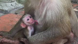 Download Broken Heart When See Cute Baby Pigtail Carter Do Bad On Newborn Baby Pigtail Monkey Kinky / PTM 415 Video