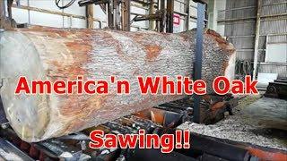 Download American white Oak Video