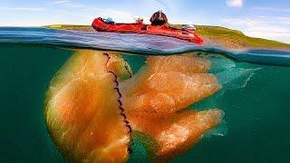 Download 14 Weirdest Looking Jellyfish Video
