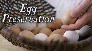 Download The Top 6 Historical Egg Preservation Techniques! Video