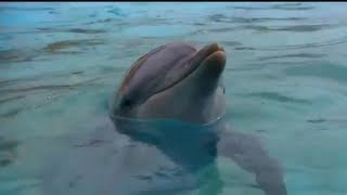 Download Talking to Dolphins | Animal Superpowers Video