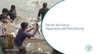 Download Fish for the Future: Aquaculture and Food Security Video