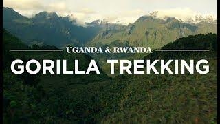 Download Gorilla Trekking, Uganda & Rwanda | Safari365 Video