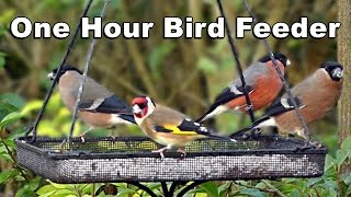 Download Video of Birds For Cats To Watch - Bullfinch, Goldfinch, Greenfinch, Blackcap HD Video