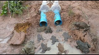 Download Smart Girl Make Deep Hole Bottle Frog Trap To Catch A Lot Of Frog Video