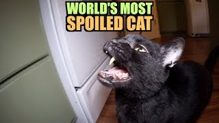 Download Talking Kitty Cat - World's Most Spoiled Cat Video