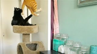 Download What Cats Do When They're Home Alone Video