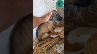 Download A very sick puppy dumped in trash... - Takis Shelter Video
