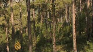 Download Pakistan tops Asia in deforestation Video