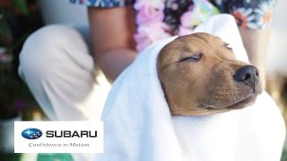 Download Dogs Visit A Spa For The First Time // Presented By BuzzFeed & Subaru Video