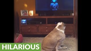 Download Bulldog reacts so scary scene from 'IT' movie Video