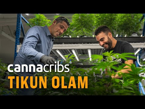 World's First Company to Legally Study Cannabis: Tikun Olam from Israel