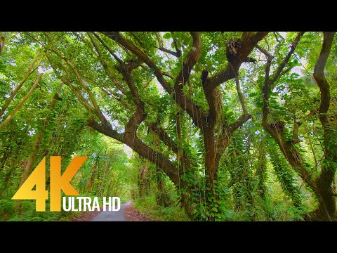 4K Puna Forest Reserve, Hawaii, Big Island - Nature Walking Tour - Short Version