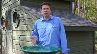 Download How to Attract Birds with Water Video