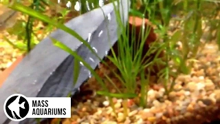 Download Can GRASS from your LAWN thrive in a PLANTED TANK? Video