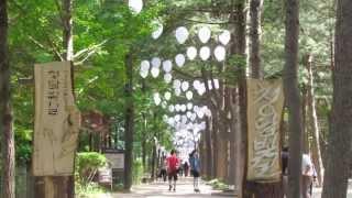 Download Adventure Time in Seoul (ATIS) - Lotte World, Namiseom/ Nami Island (Gapyeong Warf) Video
