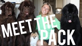 Download MEET THE PACK | MOLLY THE NEWFIE & CO Video