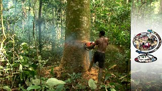 Download Cameroon's Rainforest Under Threat From Illegal Logging (2014) Video