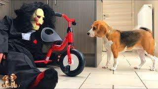 Download 10 Reasons why YOU want a BEAGLE | Beagle Universe Video