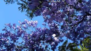 Download Sinding 'Rustle of Spring' - Hollywood Bowl Symphony Orchestra Video